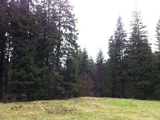 teren-predeal-site_262.jpg